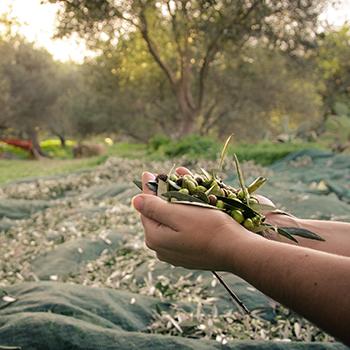 Abonos y Fertilizantes Andaluza de Olivicultura